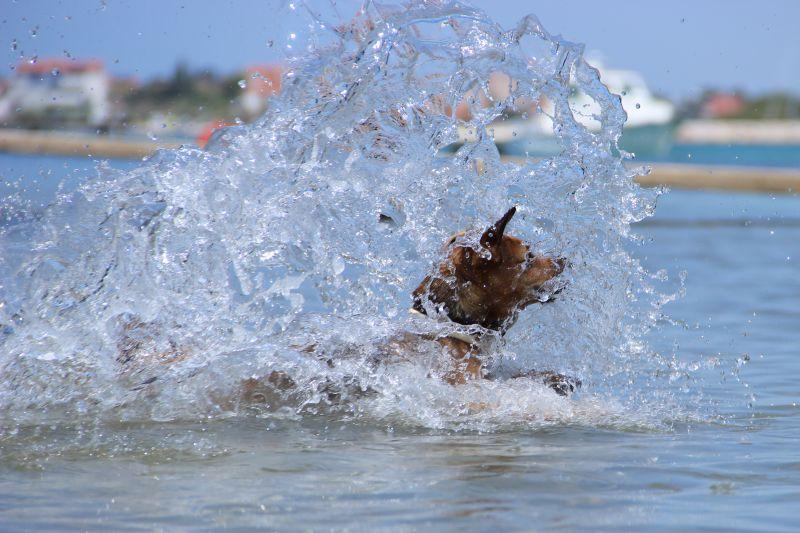 Pes vodní vlk mořský