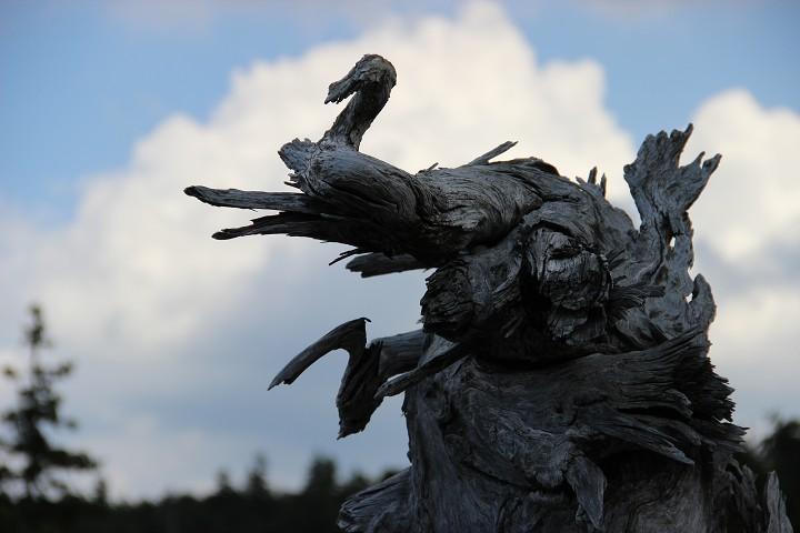 Skulptura V Severním Velebitu